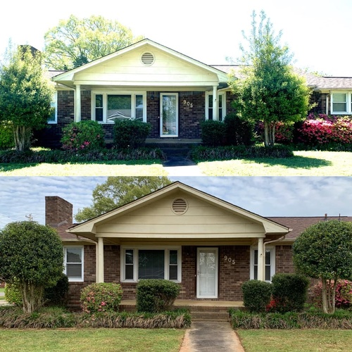 Bush trimming Tuscumbia before and after.