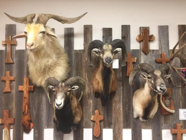 Gallery Image funky.sheep.jpg