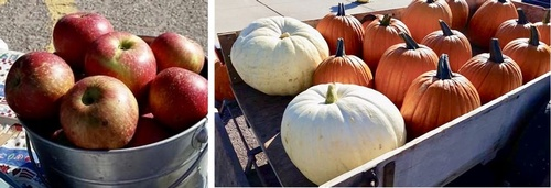 Fall produce at Pipestone Farmers Market - Photo by Erica Volkir