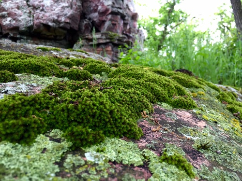 Moss & Lichens Along Circle Trail - Photo by Erica Volkir