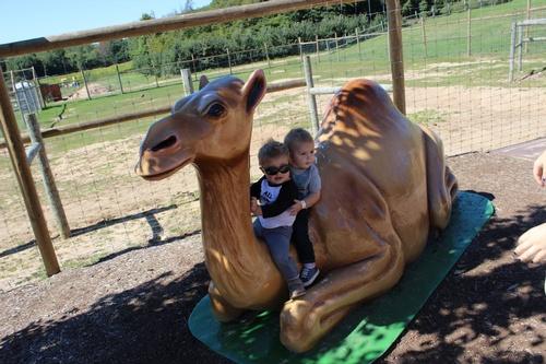Lewis Farm Market Camel