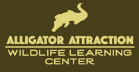 Alligator Attraction