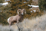 Yellowstone Wildlife & Photo Tours
