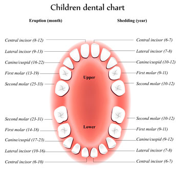 Gallery Image tooth-eruption-chart.jpg