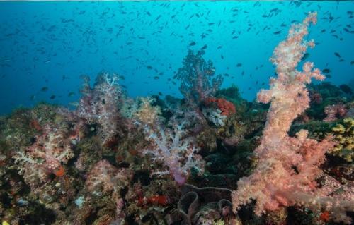 Gallery Image LRF-coral.jpg