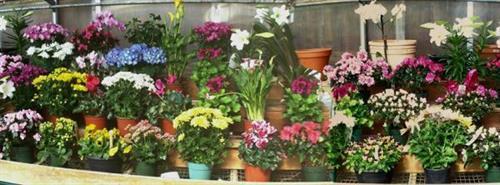Gallery Image Long%20wall%20of%20flowers.jpg