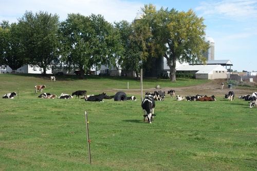 Gallery Image Cows%20roaming%20on%20farm.jpg