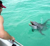 Grab the kids and go on a Dolphin Cruise - part of our Stay and Play Package!
