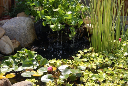 Gallery Image 03_Waterfeature-Main-Image-resize-0x0.png