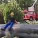 Posey's Tree Service