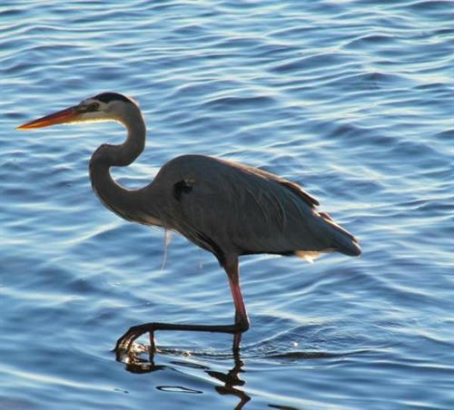 Bird at Ponce de Leon Park