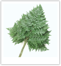 Gallery Image forest%20grove.png