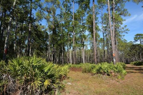 Gallery Image welaka%20state%20forest%203.jpg