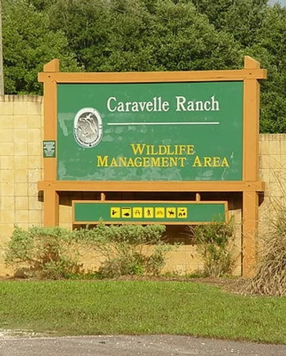 Gallery Image caravelle%20sign.jpg