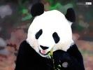 Panda Turf LLC