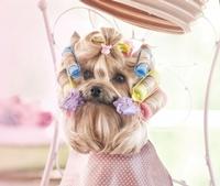 Prissy Paws Pet Salon, LLC