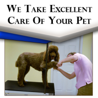 Love and tender care let's your pet feel comfortable as they enjoy their grooming experience