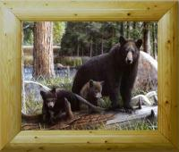 beautifully framed pieces of different wild life