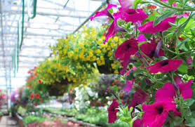 Gallery Image flowers%20hanging%20baskets.jpg
