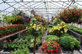 Gallery Image greenhouses.jpg