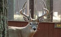 Come see where the big bucks roam
