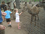 up close and personal encounters with animals