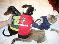 your favorite team in a kitty or doggy jersey!