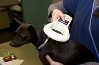 We check all pets that come in the clinic for a Microchip.