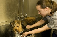 Bath times are always fun. Both pet and staff manage to get soaked during the process.