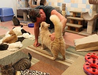Gallery Image free_roaming_cat_room.jpg