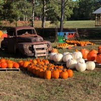 Rocky Hollow Pumpkin Patch @ Angel Farm