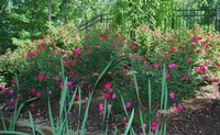 Cherokee Rose Garden Club of Cedar Bluff
