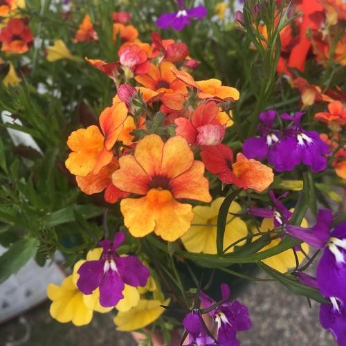 Gallery Image Flower%20combo.JPG