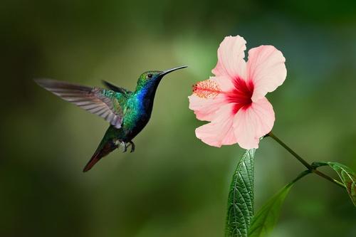 Gallery Image hummingbird%20photo.jpg