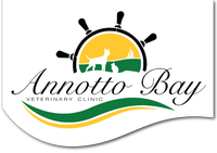 Annotto Bay Veterinary Clinic