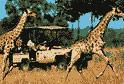 Gallery Image africansafaris_1.jpg