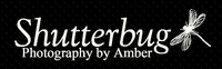 Shutterbug, Photography by Amber
