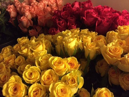 Gallery Image YELLOW%20ROSE.jpg