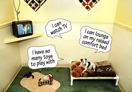 Gallery Image Carolines-Pampered-Pet-Motel-room-with-tv-and-word-bubbles_070721-123907.jpg