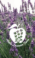 Apple Lavender Farm