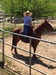 Escondido Equestrian Center for Natural Horsemanship