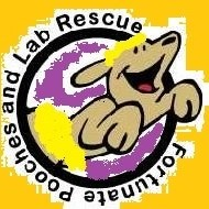 FORTUNATE POOCHES AND LAB RESCUE