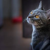 Gallery Image Cat%201.jpg