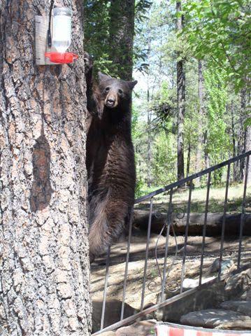 Cozy Bear Cabins Cabins Lodges Amp Condos Member