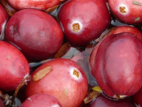 Close-Up of Cranberries