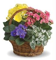 Gallery Image planter_310112-102717.jpg