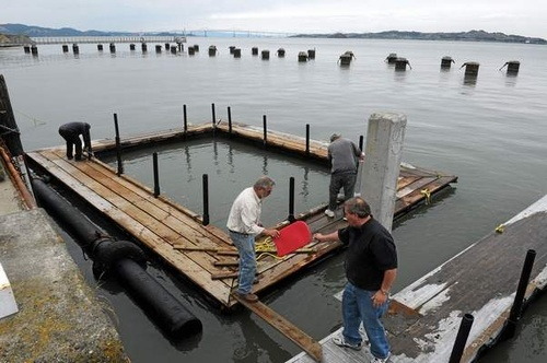 News: SF State seeks end to Tiburon salmon flap