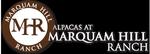 Alpacas at Marquam Hill Ranch