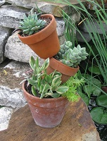 Succulents on a Patio Plant Stand - Click on ''Highlights'' then ''Plant Stands''