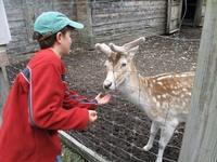 Gallery Image Deer_190216-121335.jpg